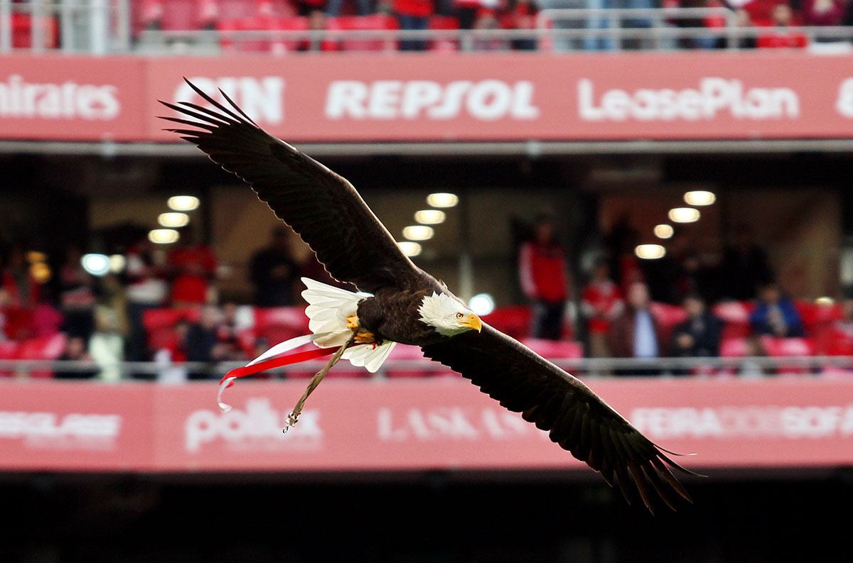 Benfica desmente interesse na Superliga europeia